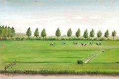 1034        Weiland met koeien   -   Hilmar Schäfer - zp