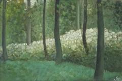 2075        Fluitekruid in het bos   -   Hilmar Schäfer - zp