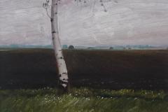 3003         Berkenboom  -  Hilmar Schäfer - zp