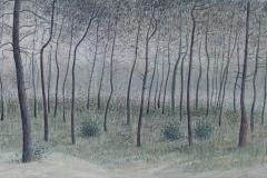 3045        In het bos bij Noverosa   -  HIlmar Schäfer - zp