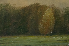 3046         Berkenboom    -    Hilmar Schäfer - zp