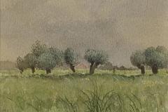 659      Landschap met knotwilgen   -   Hilmar Schäfer - zp