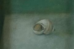 735        Schelpje (slakkenhuisje)   -   Hilmar Schäfer - zhl
