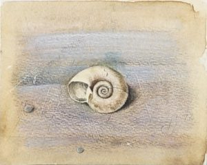Klein schilderwerkje/schetsje van een schelp van Hilmar Schäfer