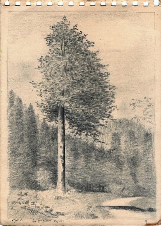 Schets van een boom vol blaadjes, gedetailleerd getekend door Hilmar Schäfer