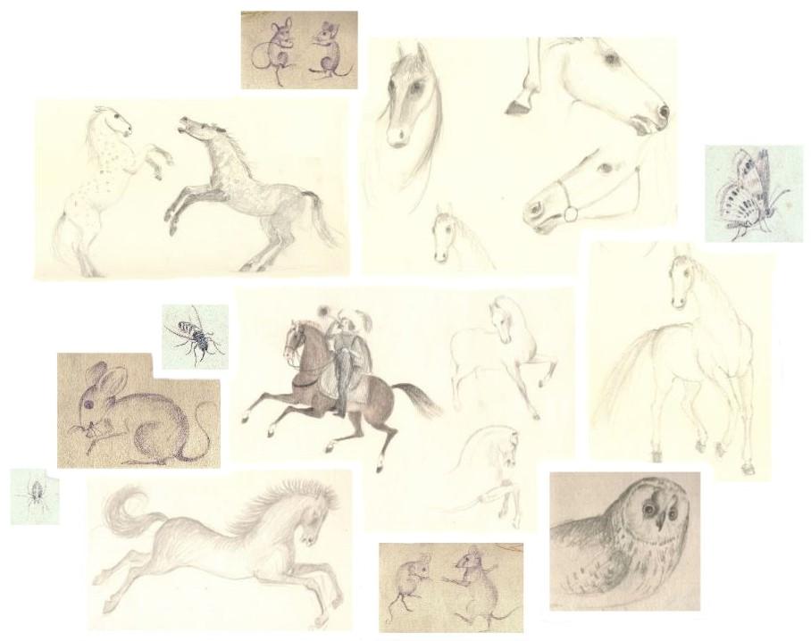 Allerlei schetsjes van Hilmar Schäfer van dieren.
